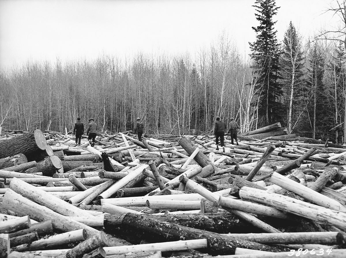 28 Apr 1937, Minnesota, USA --- Loggers walk the surface of a log jam on Minnesota's Littlefork River seeking a tall, strong log with which to build a loading boom. 1937. | Location: Littlefork River, Minnesota, USA. --- Image by © CORBIS