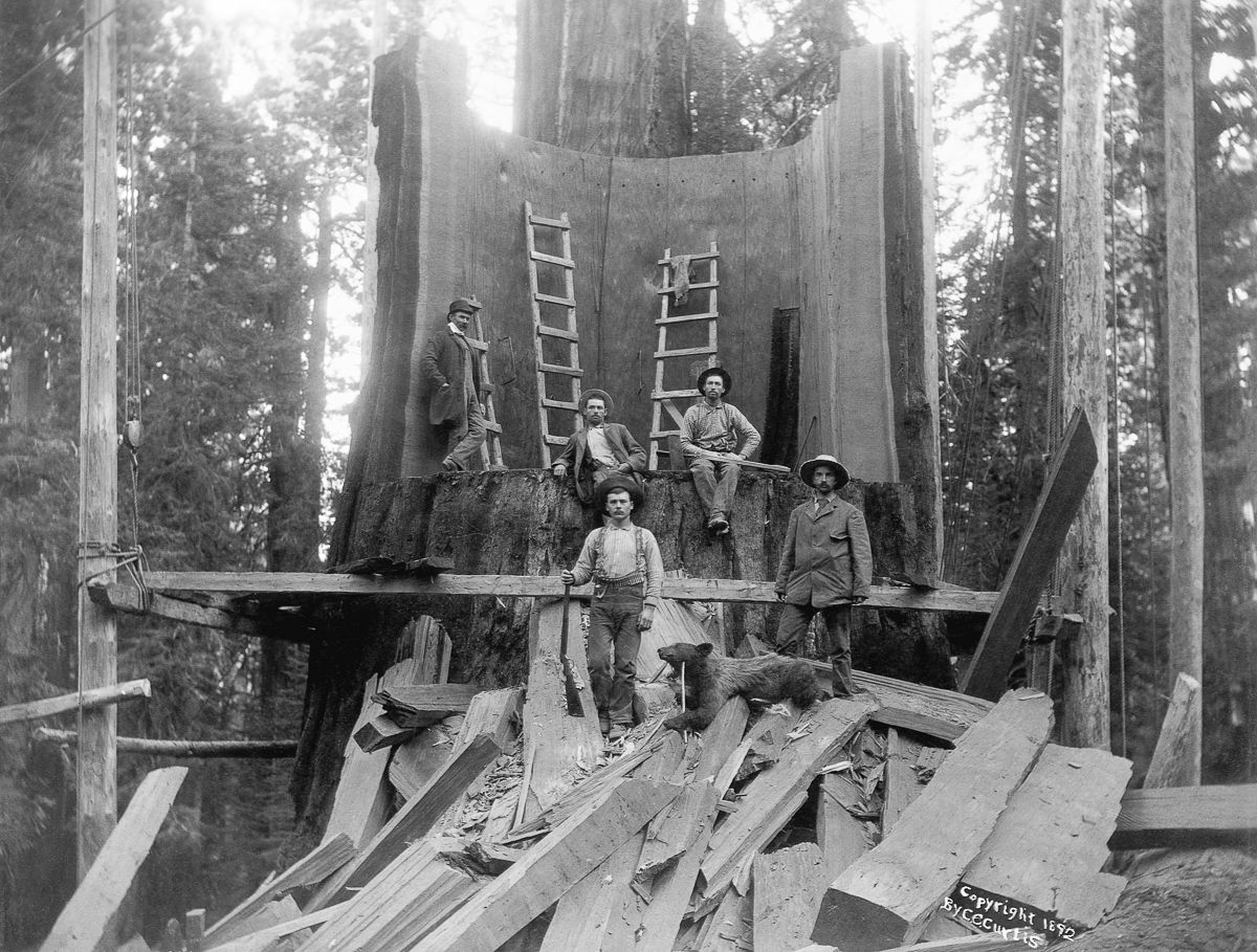 ca 1892, California, USA --- Loggers standing in the trunk of a tree they chopped down at Camp Badger in Tulare County, California. The tree was logged for the World's Columbian Exposition in Chicago, 1893. --- Image by © CORBIS