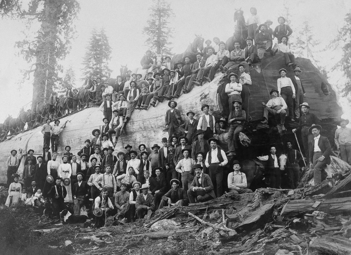 1917, California, USA --- Over 100 people stand with a logged giant sequoia tree --- Image by © A. R. Moore/National Geographic Creative/Corbis